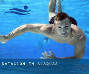 natacion-en-alaquas.swimia.p